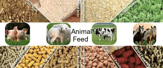 Animal Feed Market